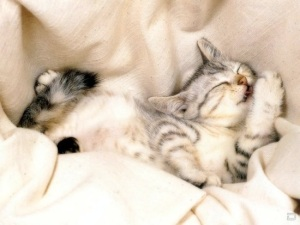 cute-puppy-and-kitten-sleeping-3